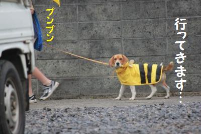 雨の散歩6
