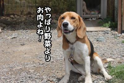 犬だもんね