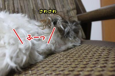 息リフレッシュ3