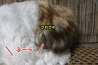 息リフレッシュ1