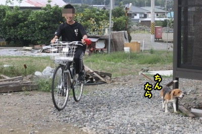 大きい自転車バージョン