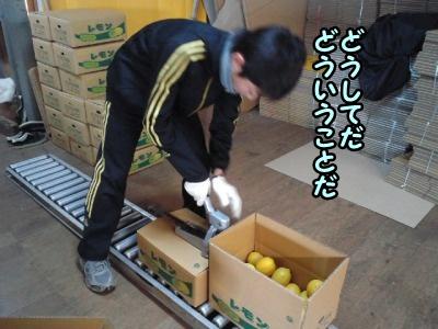 レモンの選果