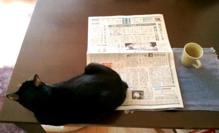 こつぶ新聞