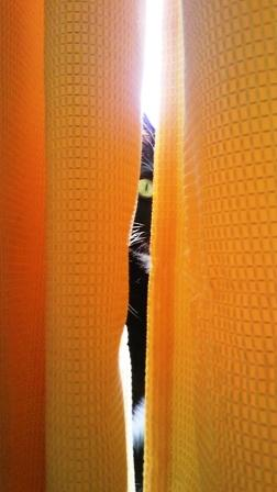 カーテンの隙間