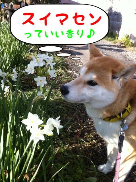 moblog_3449b832.jpg