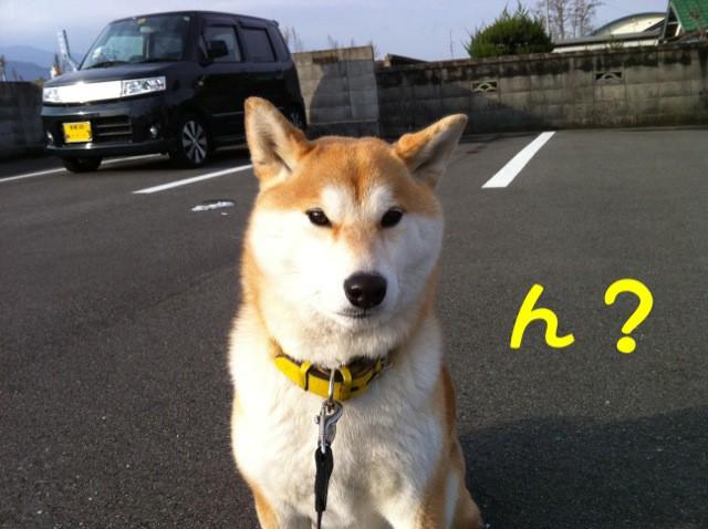 moblog_53d9019a.jpg