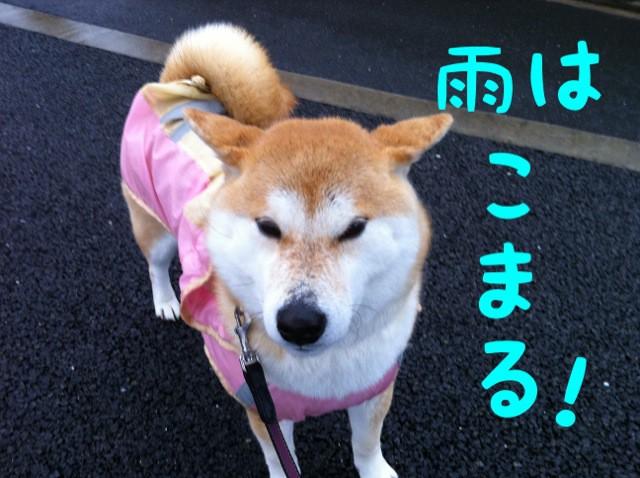 moblog_63aac485.jpg