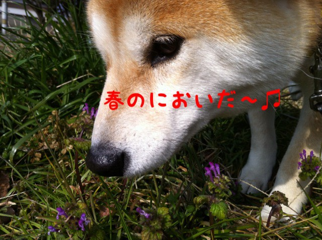 moblog_81988178.jpg