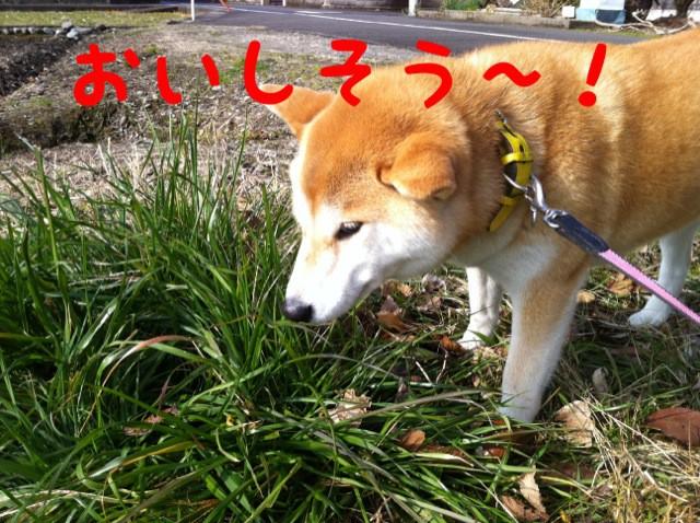 moblog_992b72a0.jpg
