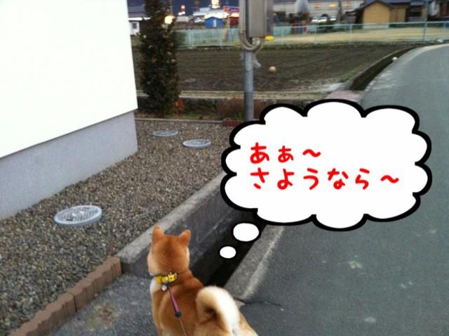 moblog_d0fe31e8.jpg
