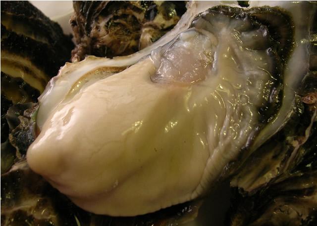 サロマ湖牡蠣
