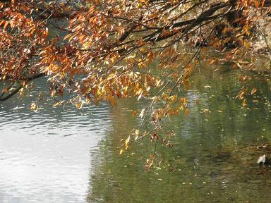 水の上にも織る錦~(童謡「まっかな秋」から)