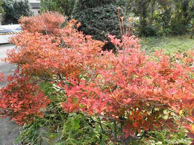 こぼれ落ちて赤くなった花。
