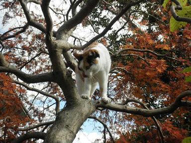 今日はこの木に登りたかったの。