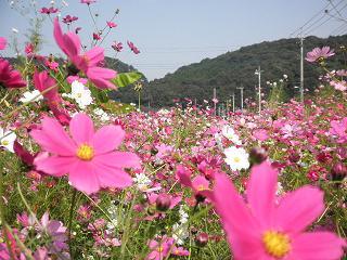 花だらけ。