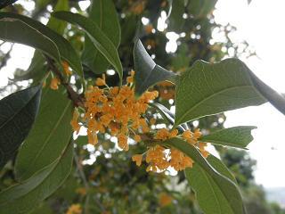 柑橘系に近い香りな希ガス。