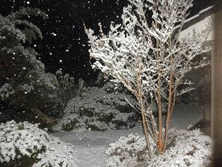 雪やこんこなう。