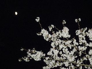 月と桜。白と白。