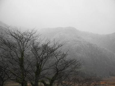 雪やこんこ。