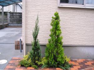 2010年11月17日植栽1