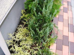 2010年11月17日植栽3