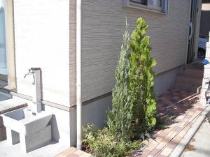 2010年11月19日外水道と植栽
