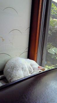 きなこちゃんのお昼寝