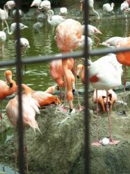 フラミンゴ王子動物園
