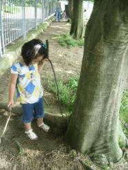 どうにかして木登りを