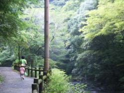 歩く森林浴