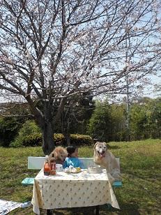 sakura9_20110410212904.jpg
