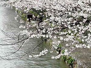 okazaki_100402_14.jpg