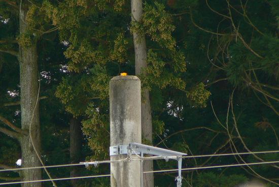 110102 電柱の上のミカン