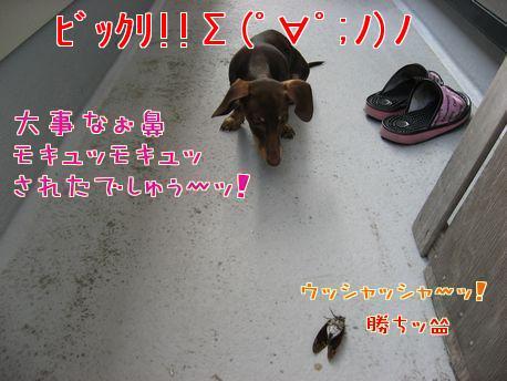モキュモキュ4