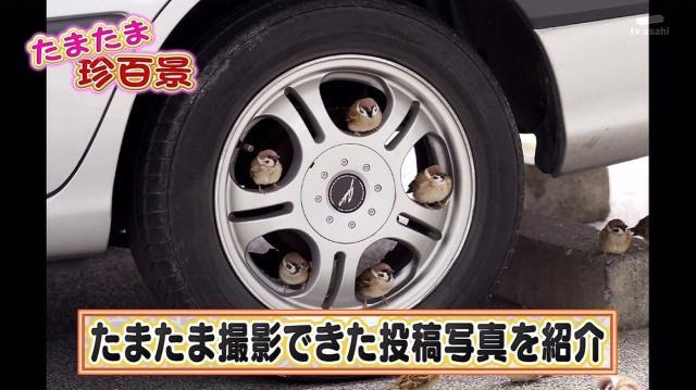5suzume_convert_20140101170426.jpg