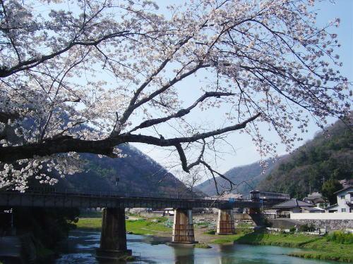 ローカル線鉄橋と桜