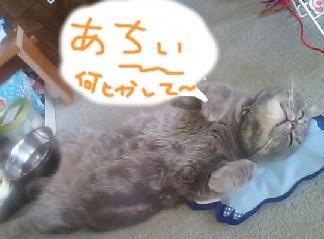 暑いよ~20120627