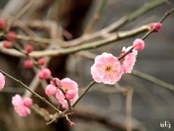 咲いてた。