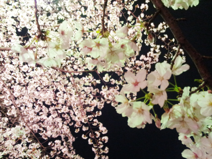 S20130322アークヒルズの夜桜