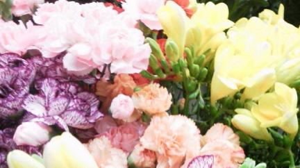 S 20120311 ローゼンの花
