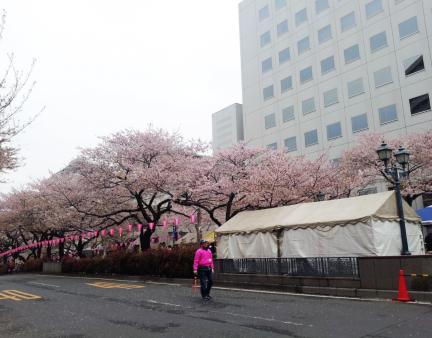 S20130331茗荷谷桜並木