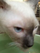 青い目のアウイン20130203