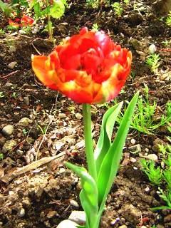 2010-05-29tyu-ripu.jpg