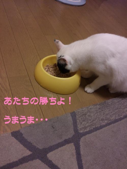 10_20111021132310.jpg