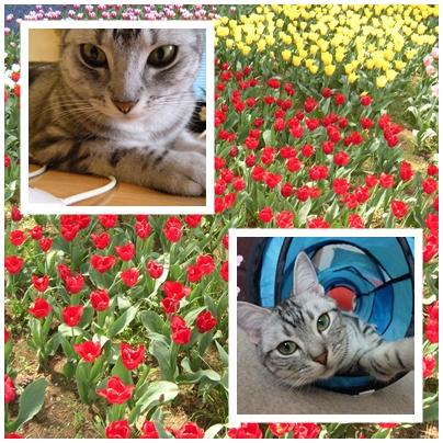 お花とミキティちゃんとビク
