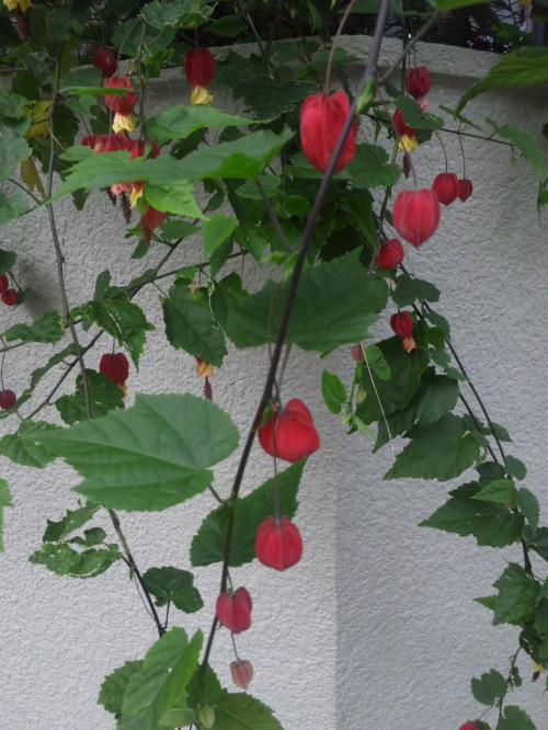 名前の知らない花 (2)