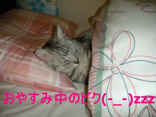 おやすみ中