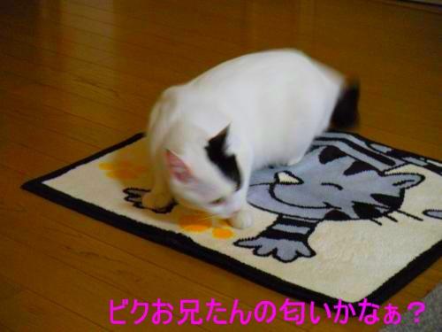 9-クンクン