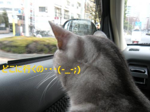 行きたくない(-_-;)