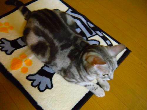 6_20111220113638.jpg